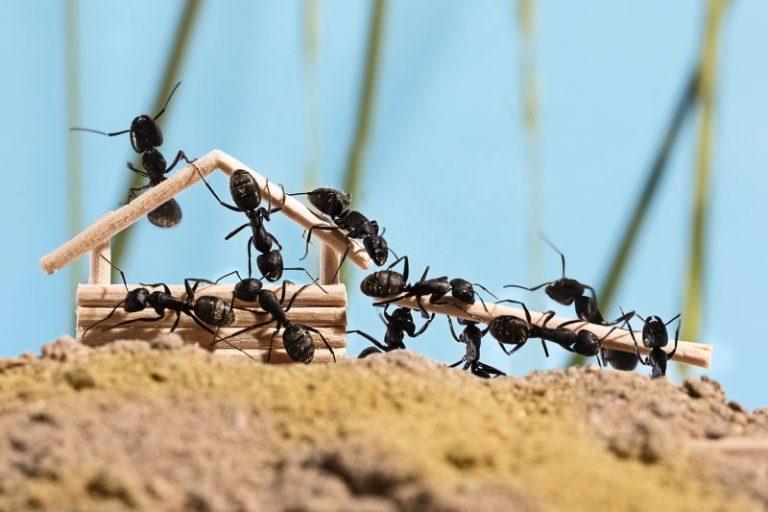 Bli kvitt maur