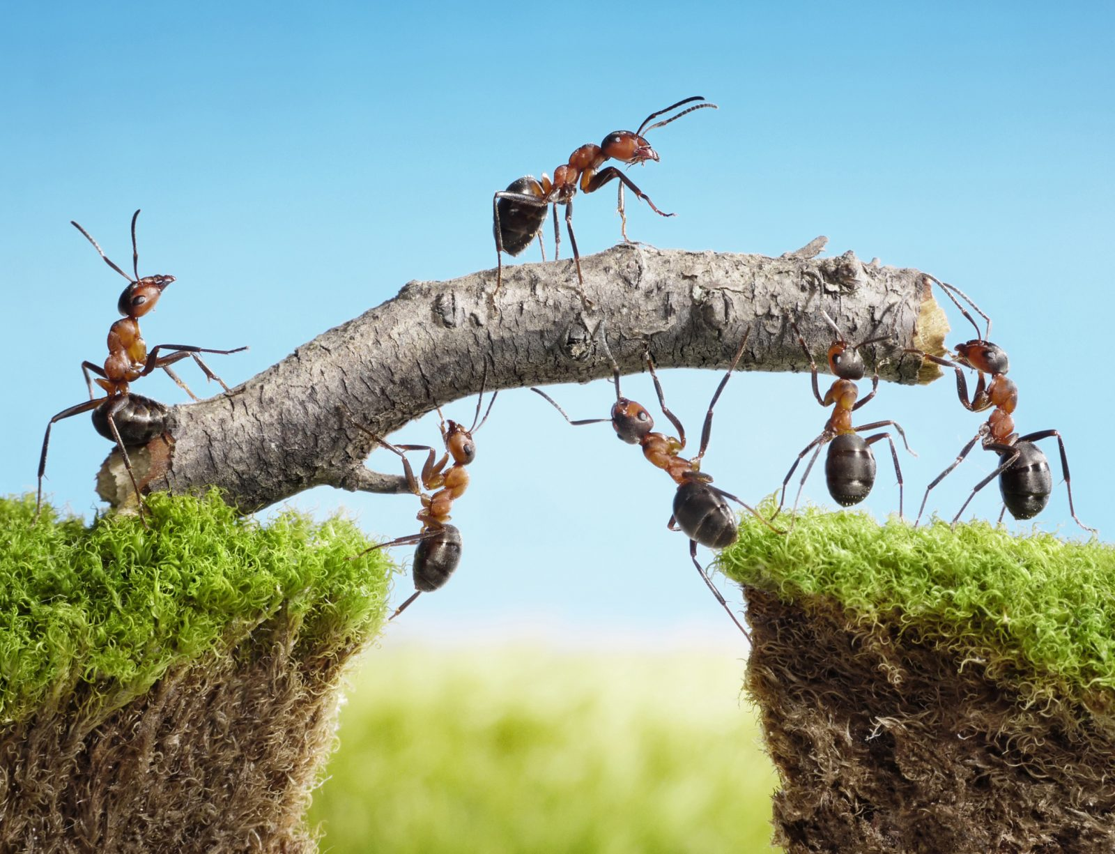 Mus, veps og maur – slik blir du kvitt skadedyr og insekter